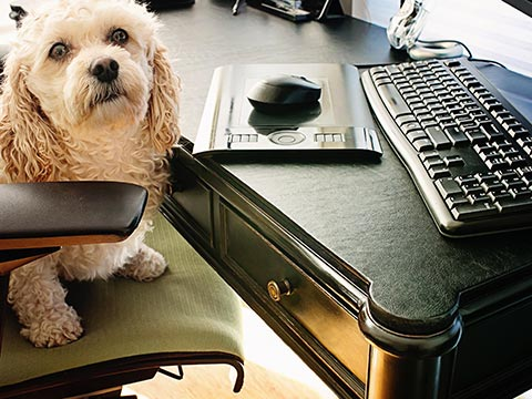 Full desktop protective cover pad with dog