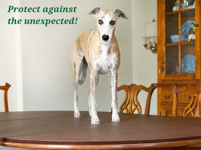 Photo: dog on dining room table pad; Protect against the unexpected!